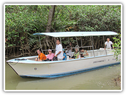 mangrove-boat-tours